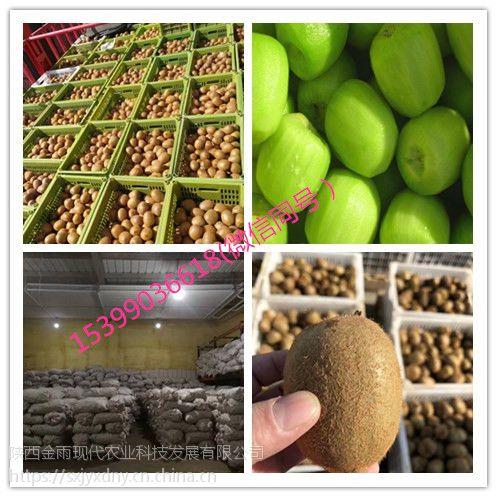 杞动能量 工厂直供速冻水果猕猴桃 周至奇异果批发