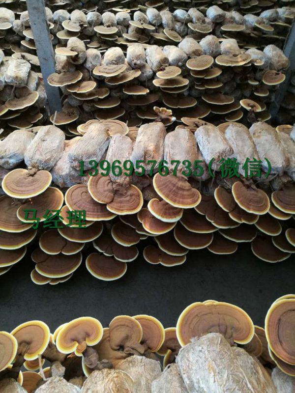 http://himg.china.cn/0/4_782_228008_600_800.jpg