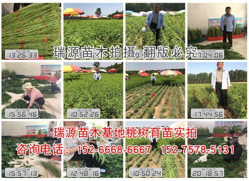 http://himg.china.cn/0/4_789_237384_800_584.jpg