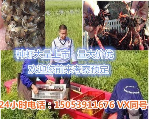 http://himg.china.cn/0/4_795_236546_500_400.jpg