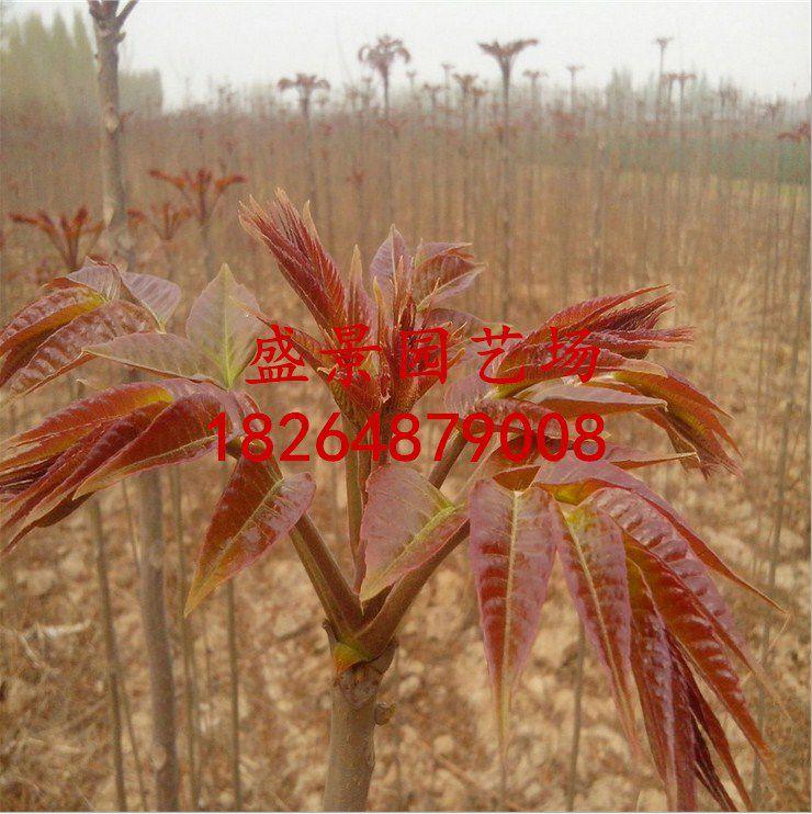 http://himg.china.cn/0/4_798_1023927_740_742.jpg