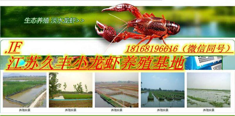 http://himg.china.cn/0/4_798_237294_800_396.jpg