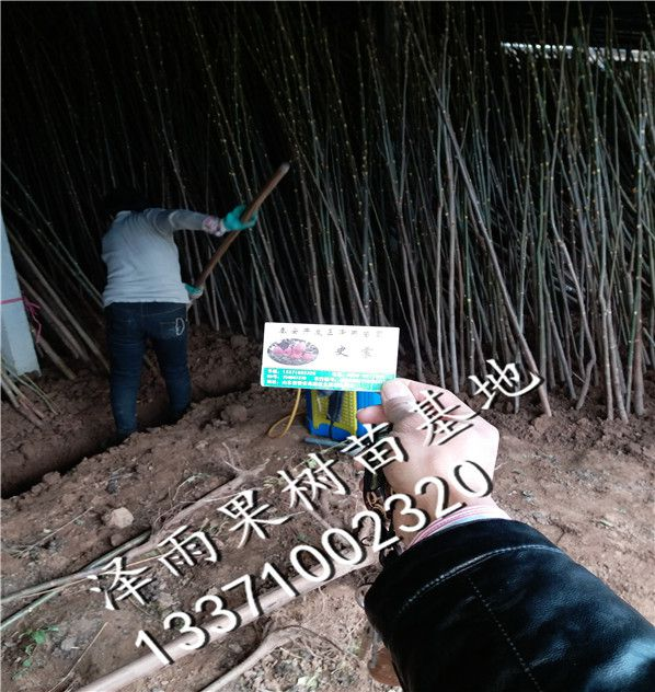 http://himg.china.cn/0/4_803_236512_598_632.jpg