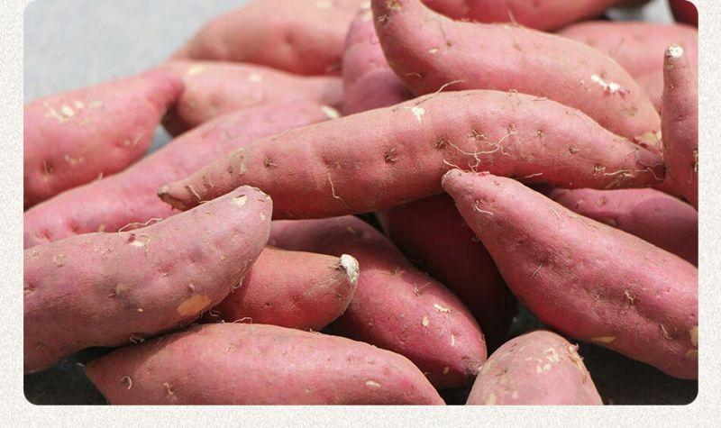 富锌硒土蜜蕃薯地瓜干福建野色天香生态农业特产供应基地