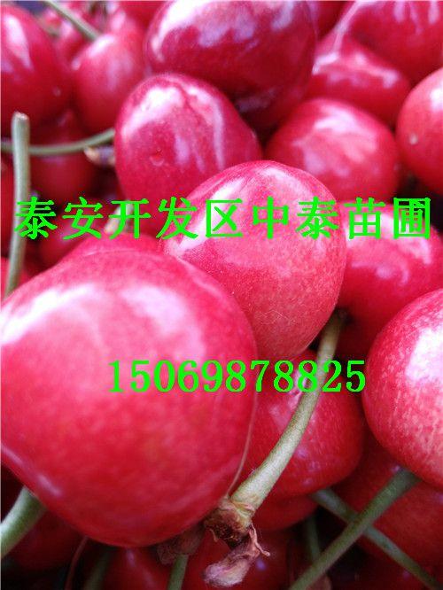 http://himg.china.cn/0/4_816_238144_500_666.jpg