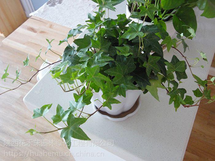 西安花卉租摆、花卉租赁、绿植租摆、花禾莯