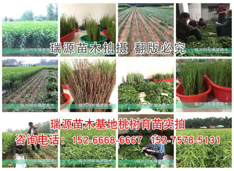 http://himg.china.cn/0/4_830_236560_800_584.jpg