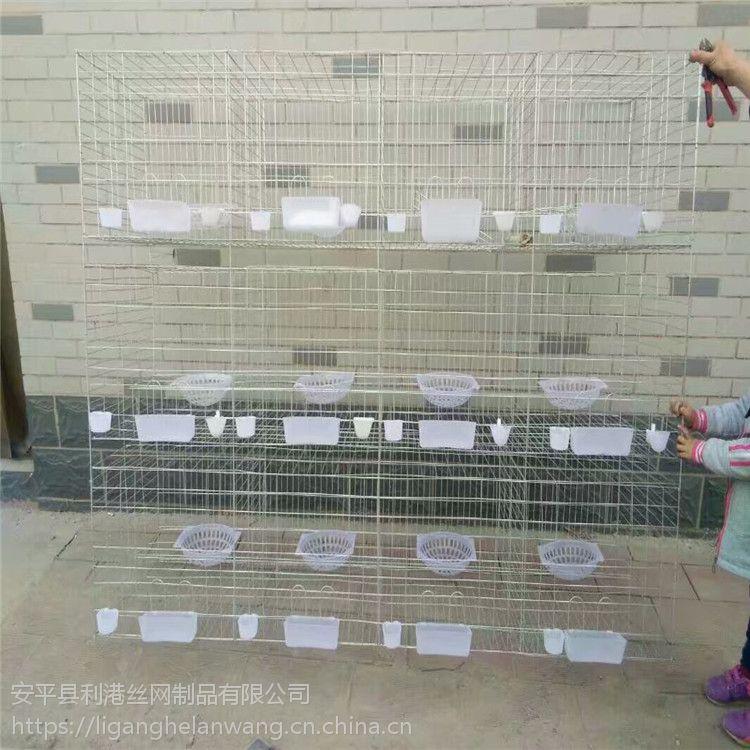 供应新疆鸽子笼 12位16位肉鸽优质笼找河北利港丝网