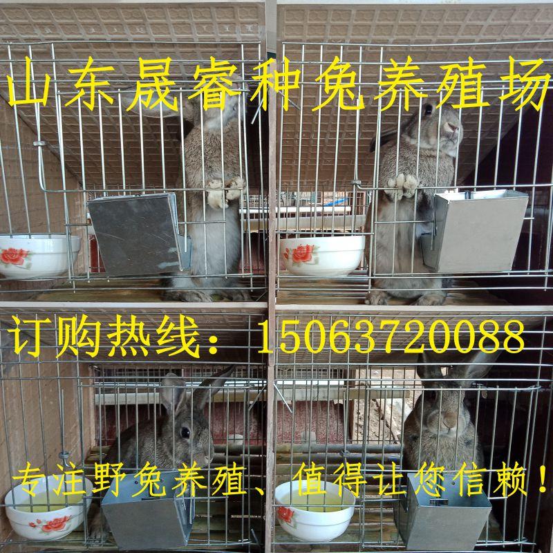http://himg.china.cn/0/4_835_238784_800_800.jpg