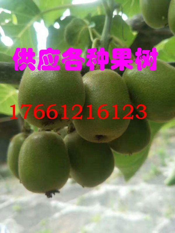 http://himg.china.cn/0/4_838_239802_600_800.jpg
