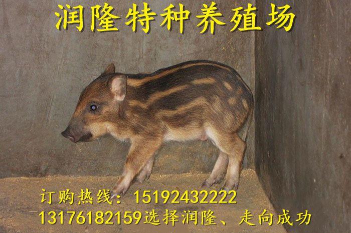 http://himg.china.cn/0/4_840_235956_700_466.jpg