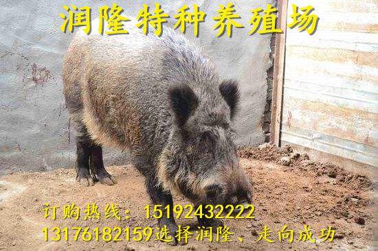 http://himg.china.cn/0/4_844_235432_550_366.jpg