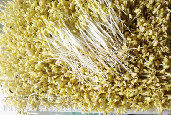 西安日产1000斤全自动豆芽机厂家直销