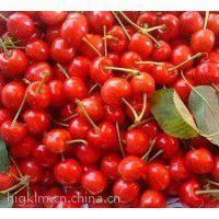 美早樱桃产地,陕西大荔县樱桃批发萨米脱樱桃基地早熟樱桃种植产地樱桃价格