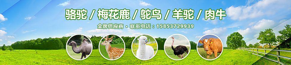 嘉祥县六合牛羊养殖场