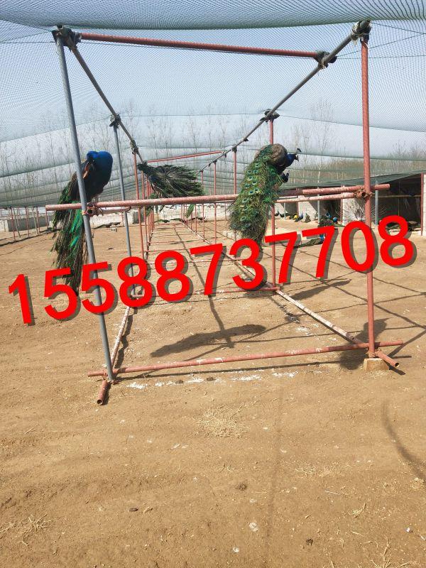 http://himg.china.cn/0/4_859_237474_600_800.jpg
