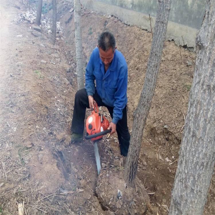 桃树断根取苗用挖树机 活率高的挖树机润众