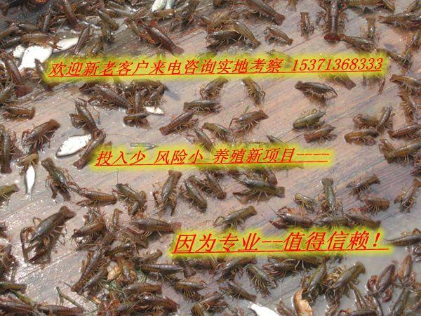 http://himg.china.cn/0/4_860_238362_600_450.jpg