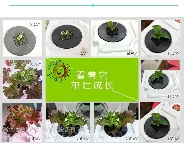 生态全智能生态菜养柜无土栽培阳台屋顶种植设备智能蔬菜