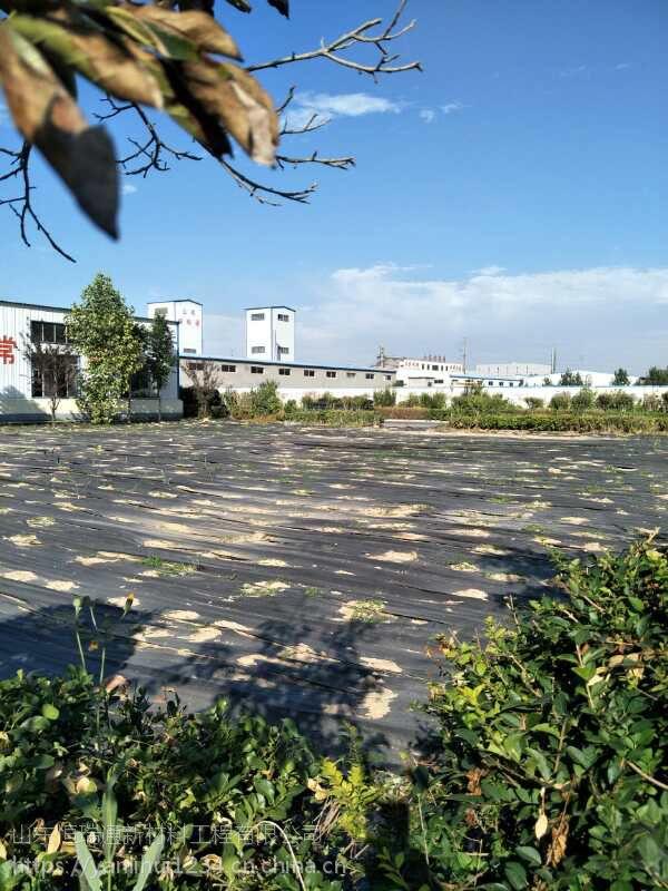 致辰果园种植地布 湖南大棚专用防草布