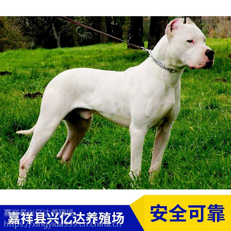 嘉祥县兴亿达小型杜高犬幼崽生态养殖园