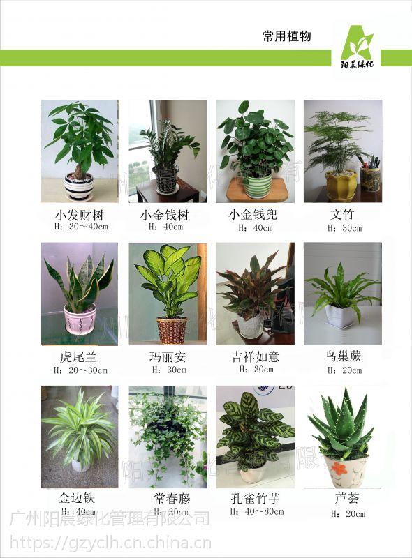 广州植物租摆,选择广州阳晨绿化