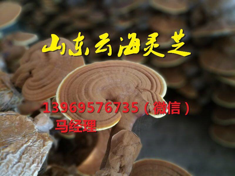 http://himg.china.cn/0/4_869_226850_800_600.jpg