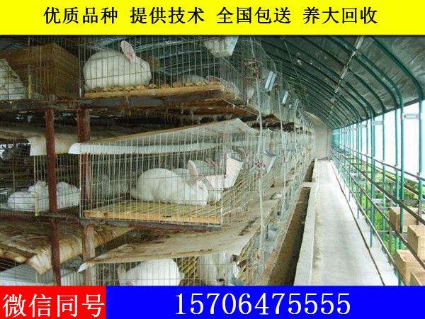 http://himg.china.cn/0/4_875_240748_600_450.jpg