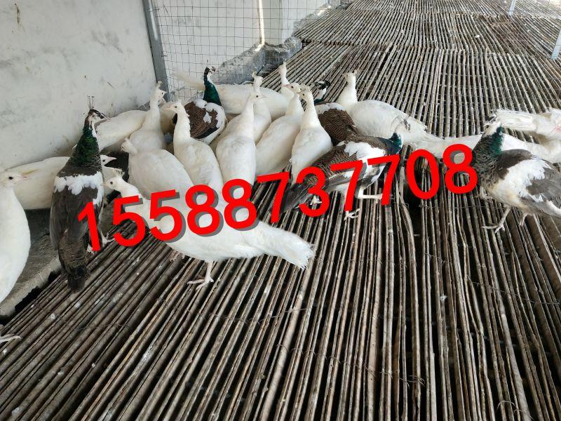 http://himg.china.cn/0/4_881_238596_800_600.jpg