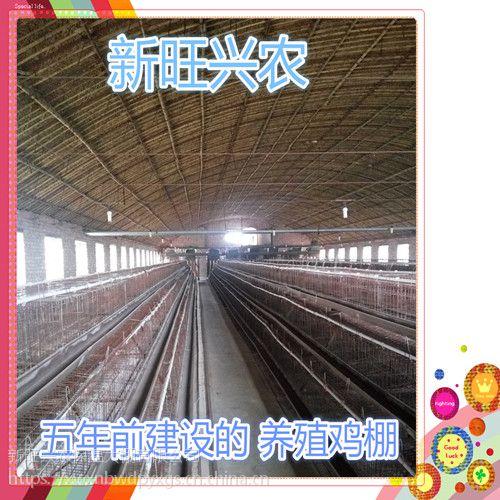 新旺兴农种植大棚建设71215热镀锌钢架大棚骨架多样化
