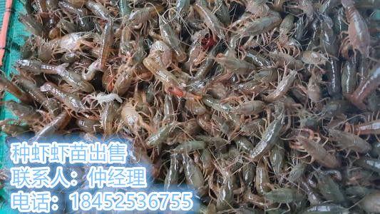 http://himg.china.cn/0/4_884_239766_533_300.jpg