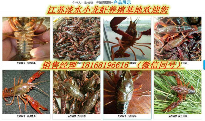 http://himg.china.cn/0/4_889_238040_800_474.jpg