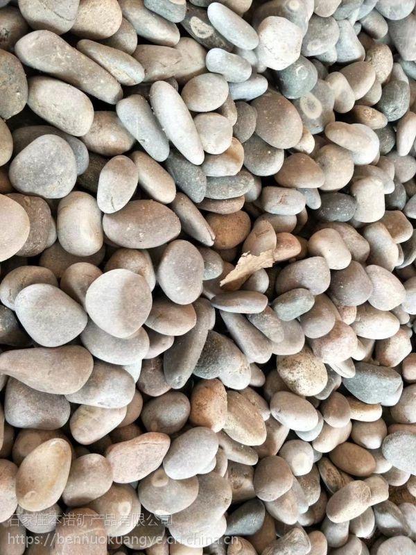 本诺厂家供应机制鹅卵石 汉白玉鹅卵石量大从优