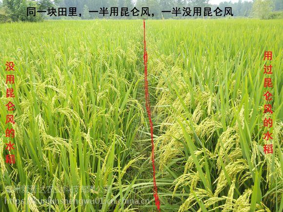 昆仑风增产套餐效果优于芸乐收 作物增产套餐叶面肥用什么好