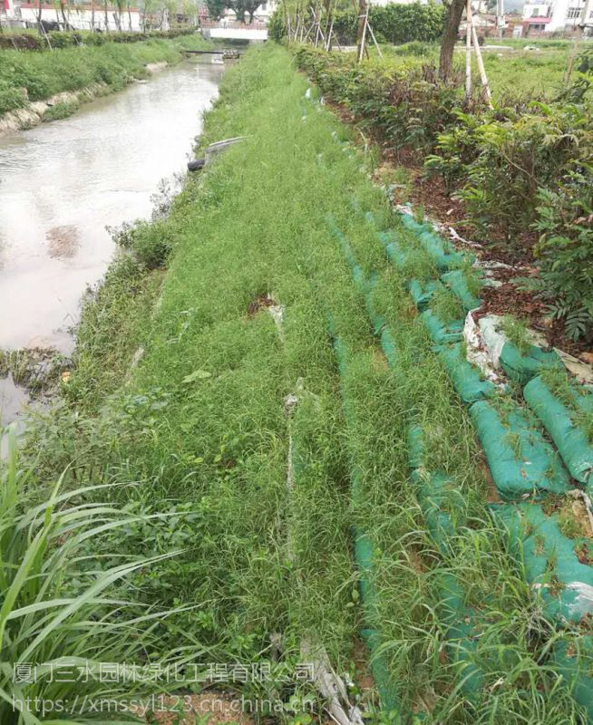 进口草种狗牙根甘孜边坡常用草批发