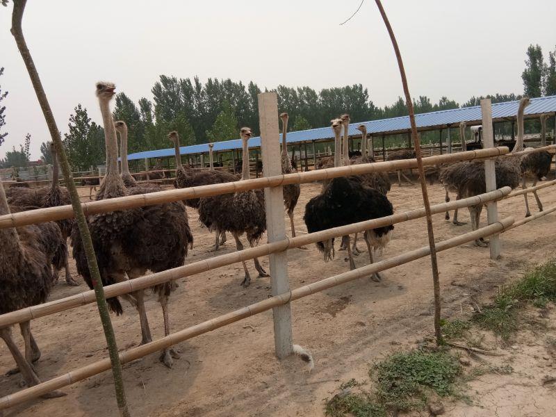 http://himg.china.cn/0/4_894_234854_800_600.jpg