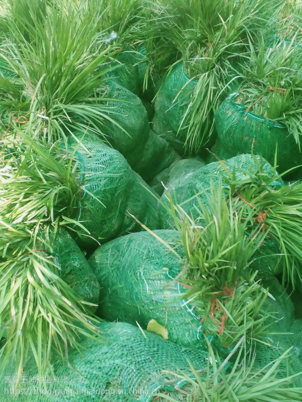 山东草坪绿化公司