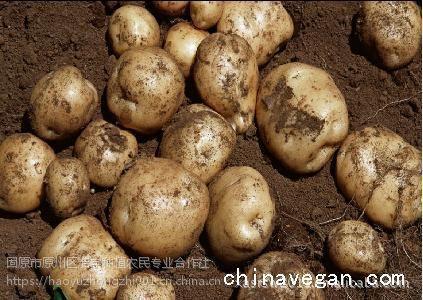 土豆 马铃薯 洋芋 宁夏固原优质洋芋 本土土豆 浩宇马铃薯 批发价格 量大优惠 优惠 质量保证