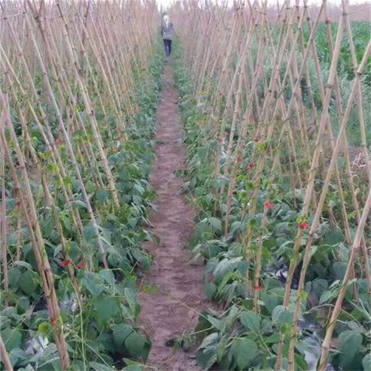 园艺番茄绑枝机 果蔬秧藤绑枝机