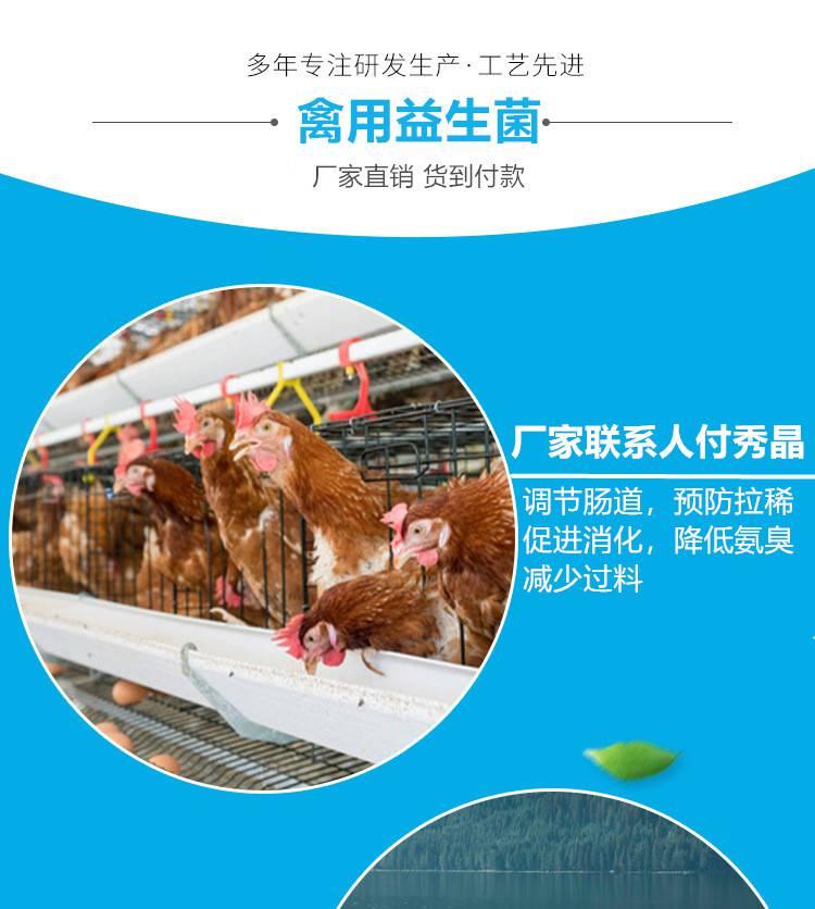 治疗蛋鸡沙皮蛋白蛋专用产品|蛋鸡微生态