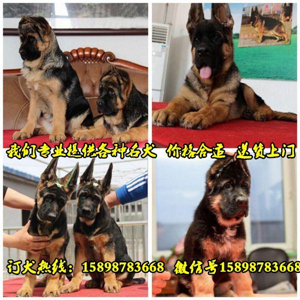 http://himg.china.cn/0/4_909_244136_600_600.jpg