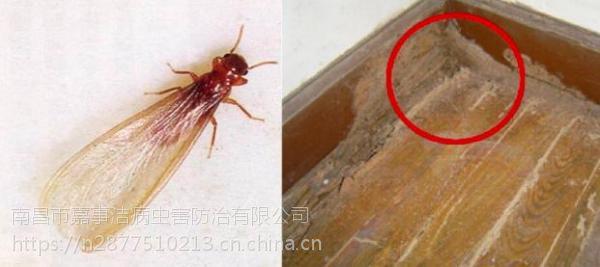 丰城除虫公司,丰城白蚁防治公司,丰城灭鼠公司