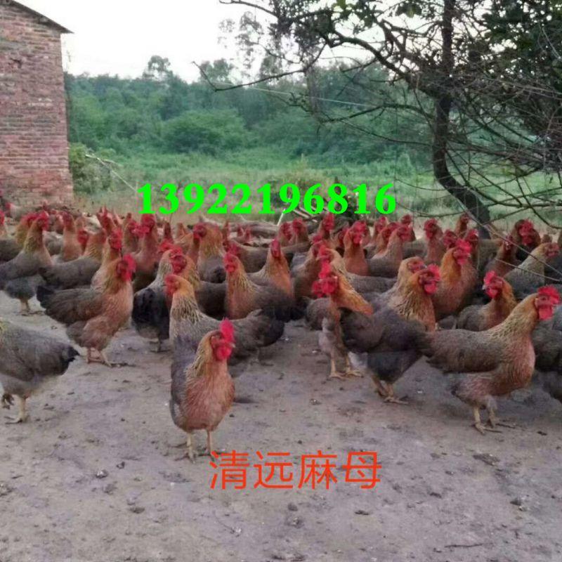http://himg.china.cn/0/4_921_1020591_800_800.jpg