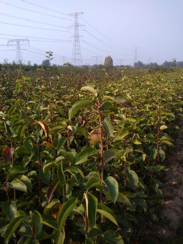http://himg.china.cn/0/4_923_237142_600_800.jpg