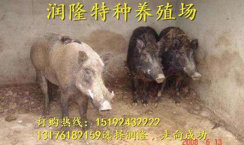 http://himg.china.cn/0/4_924_235166_503_300.jpg