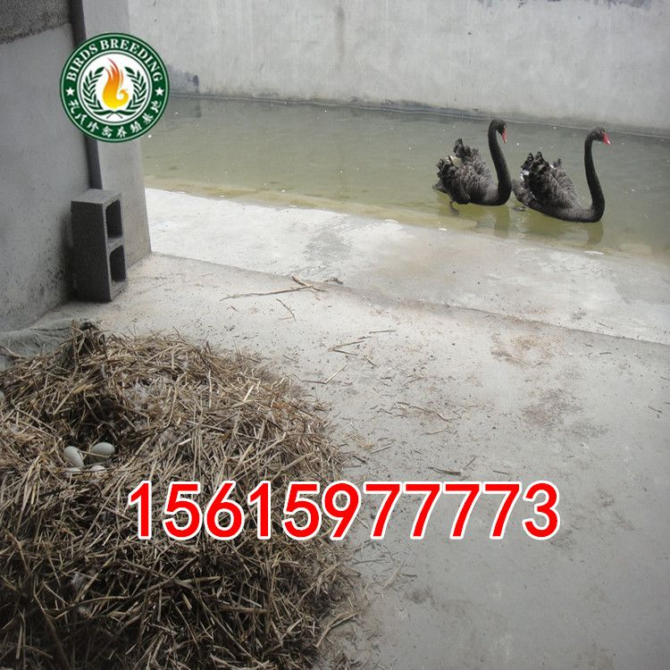http://himg.china.cn/0/4_927_237994_750_750.jpg