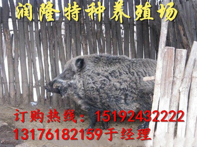 http://himg.china.cn/0/4_929_238146_669_500.jpg