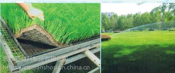 抗冲击绿化毯营养土工布专业护坡宏祥厂家直销
