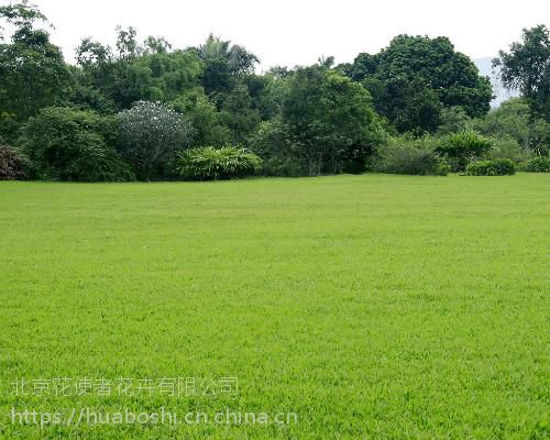 北京绿化公司专业园林苗木种植,铺草坪,绿化养护工程
