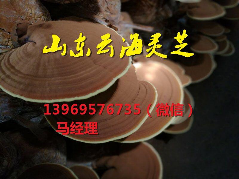 http://himg.china.cn/0/4_943_227828_800_600.jpg